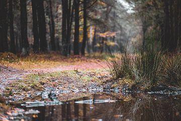 waterplas in het bos van Tania Perneel