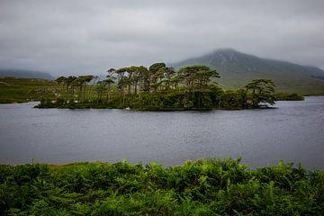 eiland met bomen  in meer in Ierland van Eric van Nieuwland