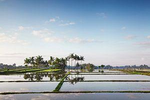 Bali rijstterrassen. De mooie en dramatische rijstvelden. Een echt inspirerend landschap van Tjeerd Kruse