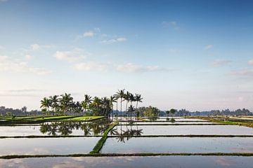 Bali Reisterrassen. Die schönen und dramatischen Reisfelder. Eine wirklich inspirierende Landschaft von Tjeerd Kruse
