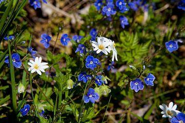 Blumenwiese im Frühling von t.ART