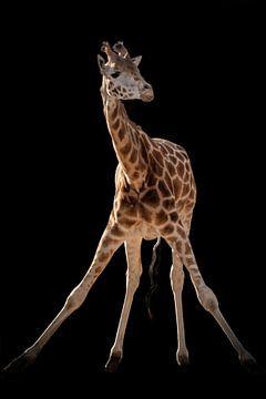 Giraffe Gymnastik von Marjolein van Middelkoop