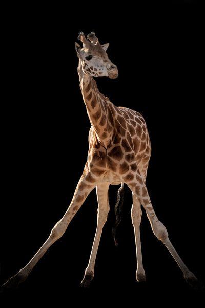 Giraffe gymnastiek van Marjolein van Middelkoop