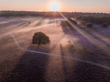 Nebliger Sonnenaufgang über Bussumer und Westerheide von Michiel Dros