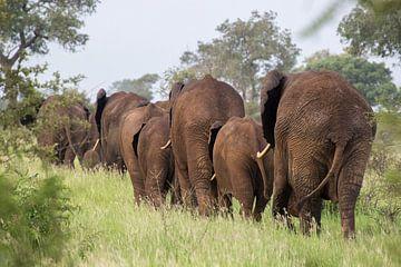 Olifanten karavaan, krugerpark, zuid afrika van Marijke Arends-Meiring