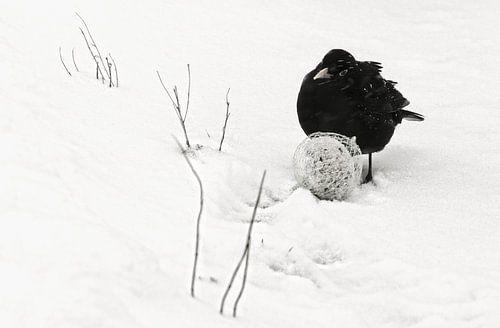 Merel in winterlandschap van Marlies Prieckaerts