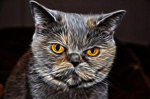 Flaming Feline