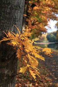 Herfst langs het kanaal van