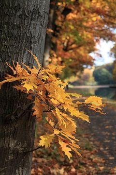 Herfst langs het kanaal