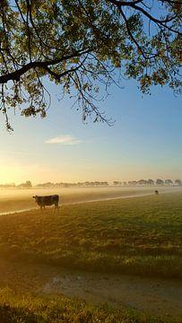 Nederland landschap van f th