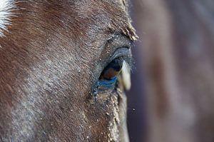 Pferd auf Ameland (2) von Willem Holle WHOriginal Fotografie