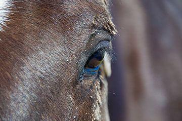 Paard op Ameland (2) van Willem Holle WHOriginal Fotografie