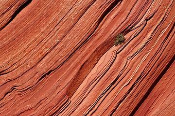 boompje op een rotswand sur