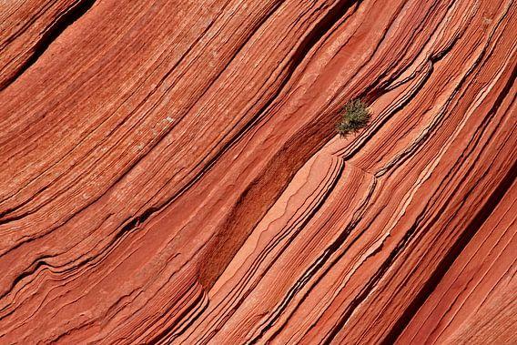 boompje op een rotswand