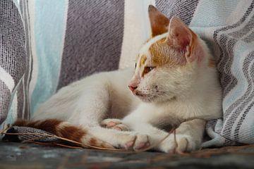 Türkische Katze von Marieke Funke