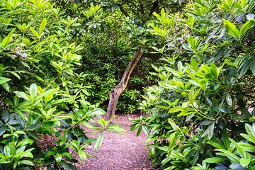 Versteckter Baum von Joran Quinten