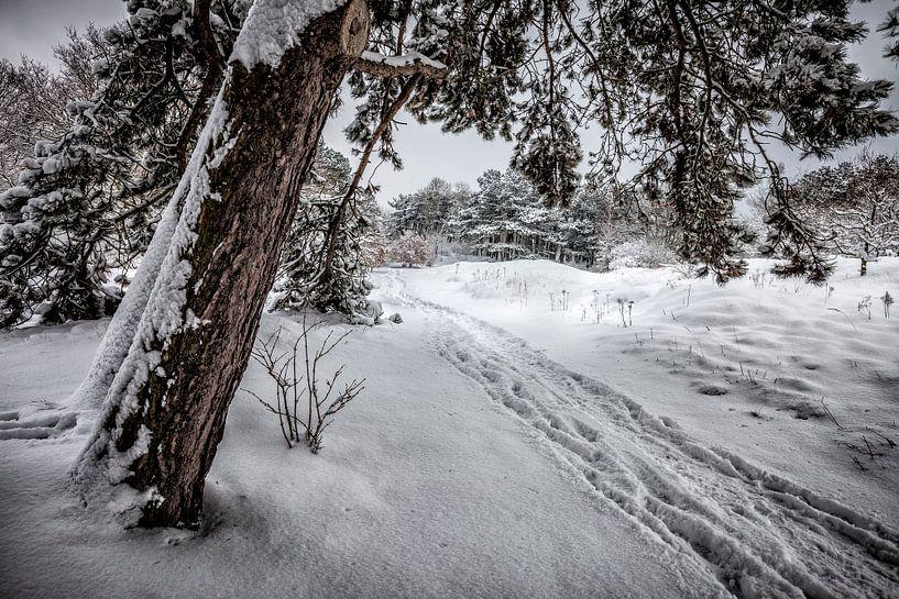 Winter Wonderland van Nanouk el Gamal - Wijchers (Photonook)