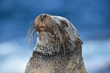 Galapagos zeeleeuw van Jaap Voets