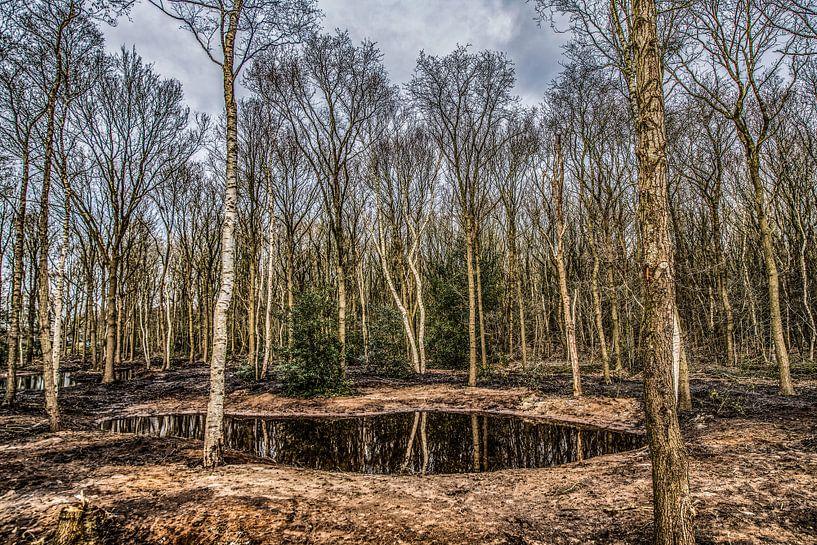 Bomenrij en vennetje in het Zuid-West Friese natuurgebied Gaasterland van Harrie Muis
