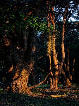 Gloeiende bomen van Mattijs Diepraam