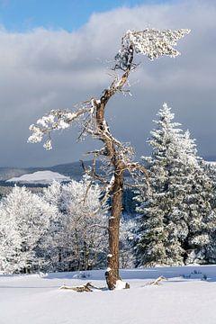 Verschneiter alter Baum in einer Winterlandschaft