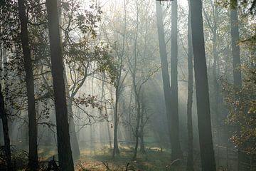 Mysteriöser Wald im Nebel an einem sonnigen Herbstmorgen auf dem Utrechtse Heuvelrug - Veluwe - Utre von John Ozguc