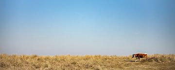 Breedbeeld van bruine koe op uitgestrekte vlakte van Percy's fotografie