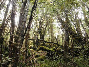 Nieuw Zeeland - Bush van Maurice Weststrate