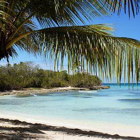 Tropical Island Beach palmboom van Brian Raggatt