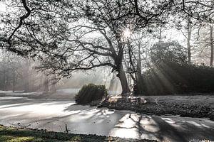 lichtstralen door de bomen van