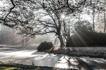 lichtstralen door de bomen van Willy Sybesma