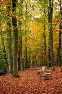Herfst bos van Ema Erkens