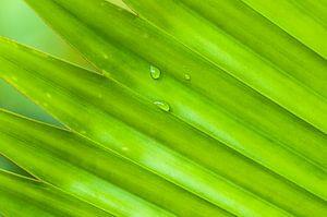 Groen tropisch blad met waterdruppels van