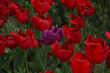 Tulpen bloem van Mila van Pijkeren