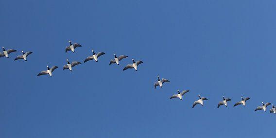 Vogelvlucht van Yvonne Blokland
