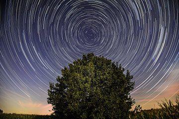 Sentiers en étoile au-dessus d'un vieux chêne sur René van der Horst
