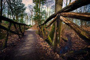 Himmelsberg in Renkum | Landschaft & Natur