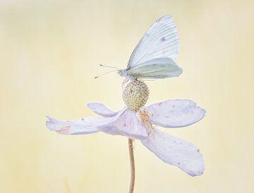 Weißer Schmetterling auf Blume von natascha verbij