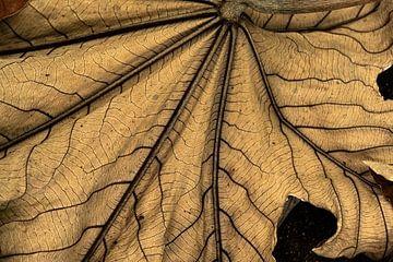 Reuzenblad van Carla van Zomeren