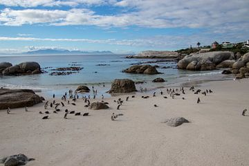 Pinguin kolonie van Nathalie van der Klei