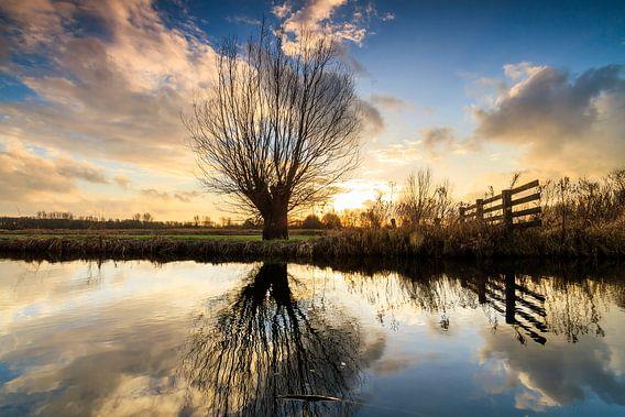 Knotwilg reflectie van Dennis van de Water