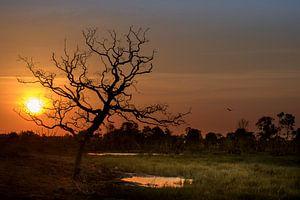 Zonsondergang op Borneo van Klaas Stoppels
