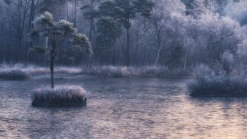 frosty morning 2 van Erik de Jong