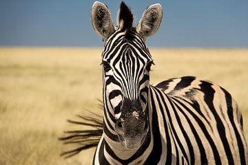 Kleurrijke zebra met een zwiepende staart van Marit van de Klok