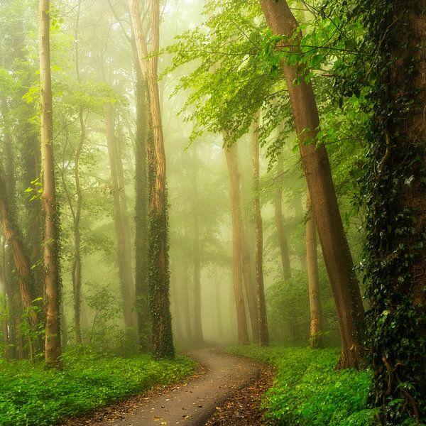 Bos van Lars van de Goor