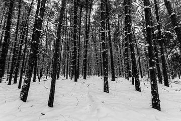 Winters bos 4 van Albert Mendelewski