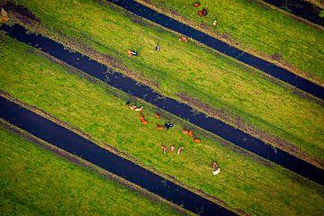 Koeien vanuit de lucht van Leon van der Velden