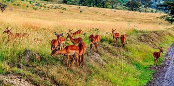 Herten in de Masai Mara von René Holtslag