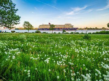 toile-2018-05-13 Pissenlit et mon bateau 1 sur Joachim Fischer