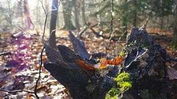 Stam in het bos van Esmée Kiezebrink